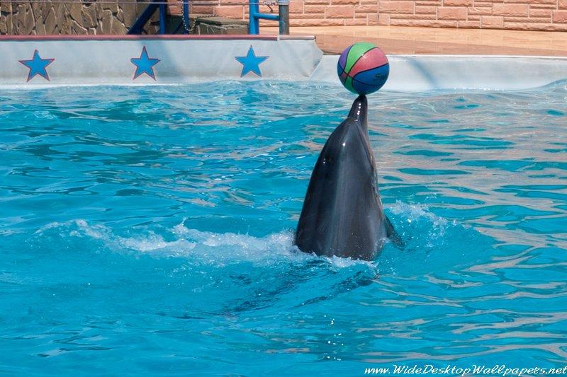 дельфинарий, адлер