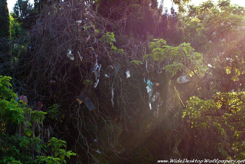 Дерево несбывшихся надежд