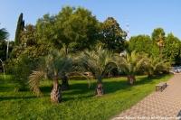аллея пальм