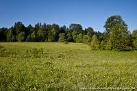 Камышанова поляна
