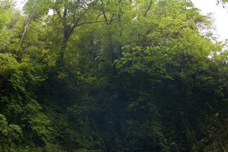 Нависающие деревья